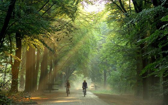 1382210982--img--fietsen_in_bos